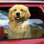 ¿Cuánto puede tardar un perro en morir encerrado en un coche al sol?