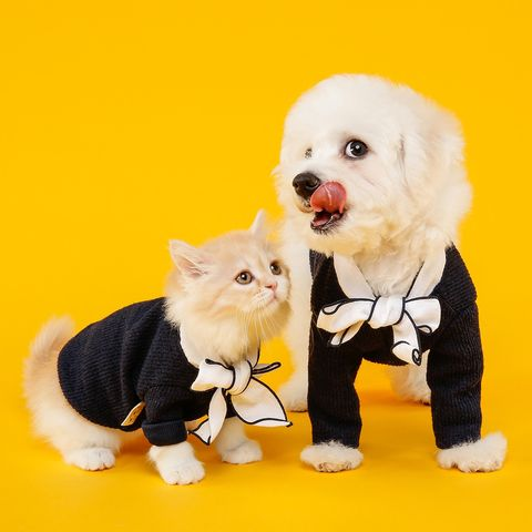 ¿Cuántos perros y gatos se comen cada año en China?