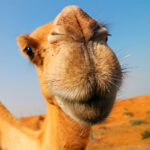 ¿De dónde sacan el agua los animales del desierto?