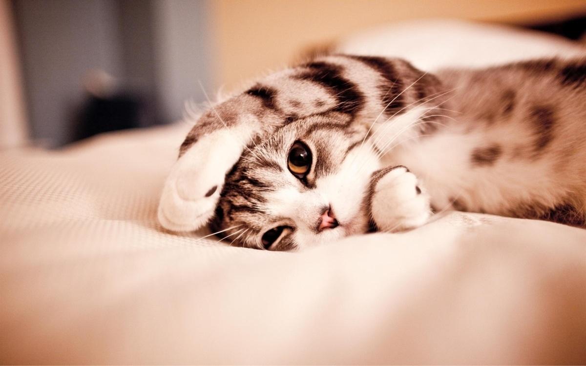 ¿De dónde sale el ronroneo que hacen los gatos?