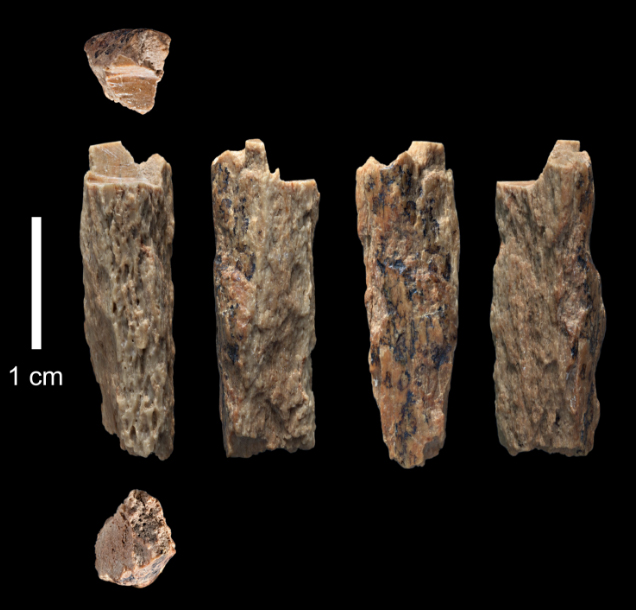 De madre neandertal y padre denisovano