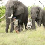 Derrick Campana, el hombre que diseña prótesis para elefantes