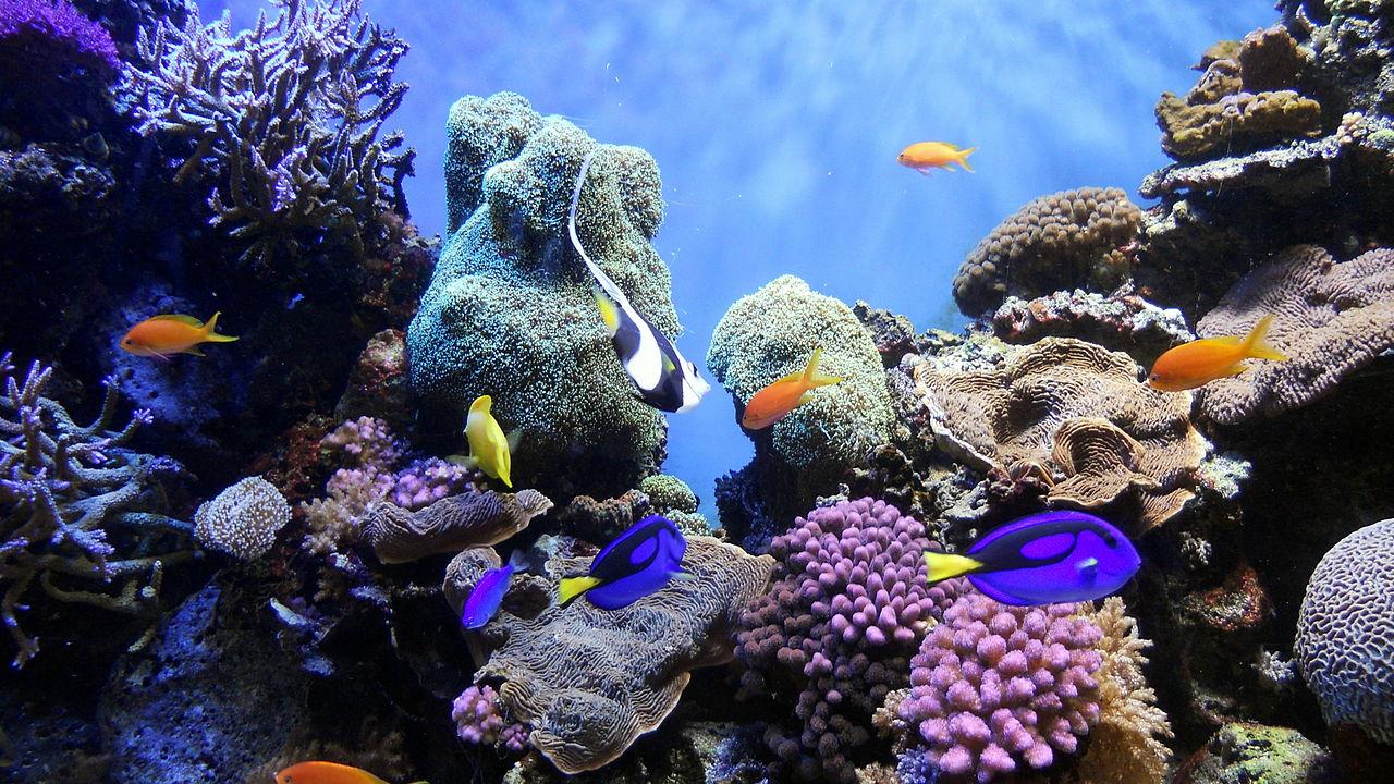 Descubren corales zombis