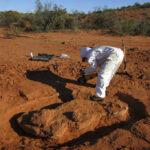 Descubren el dinosaurio gigante más antiguo conocido
