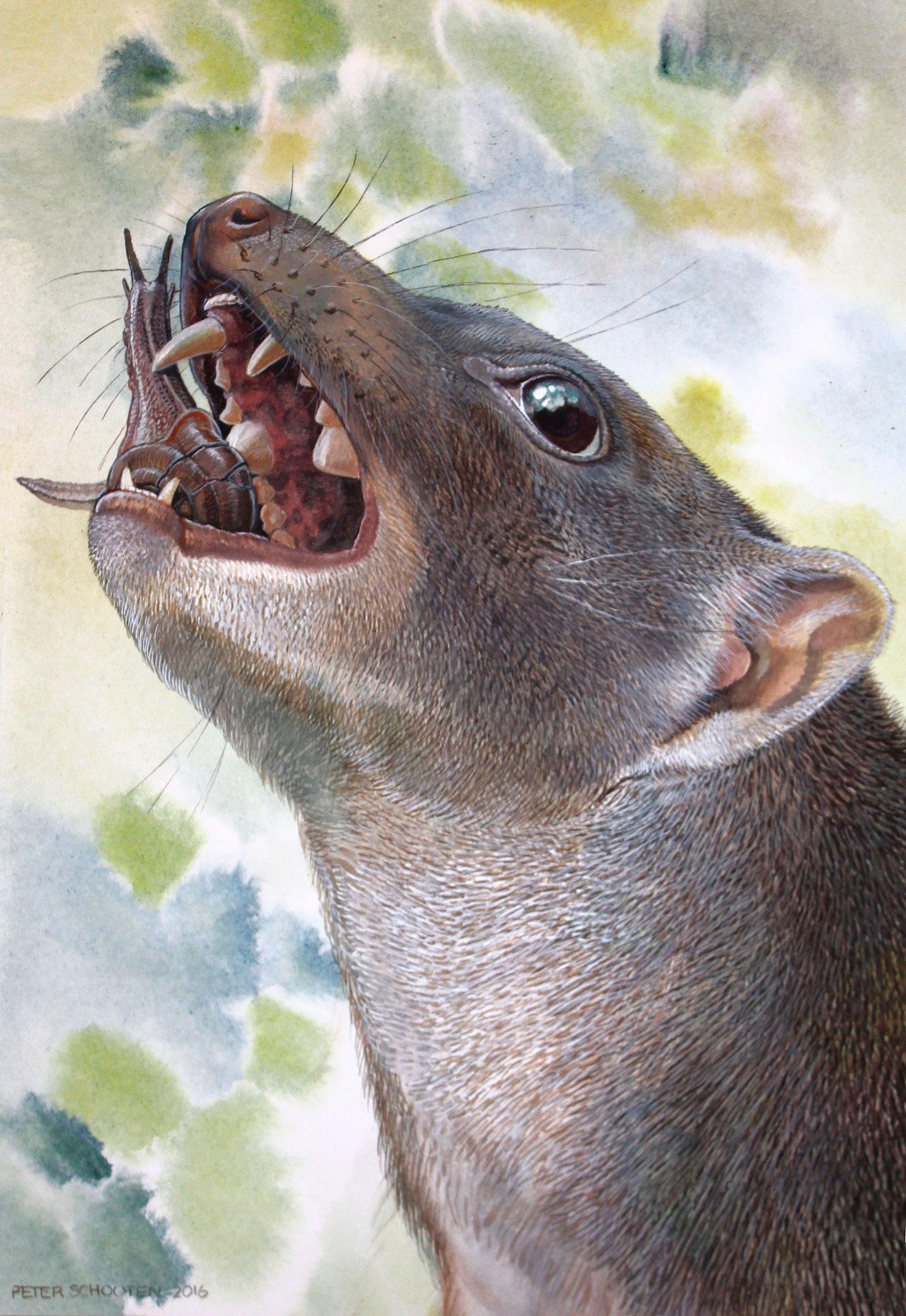 Descubren fósil de un marsupial desconocido