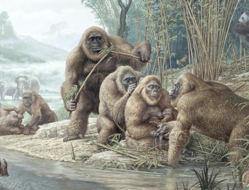 Descubren por qué se extinguió el auténtico King Kong
