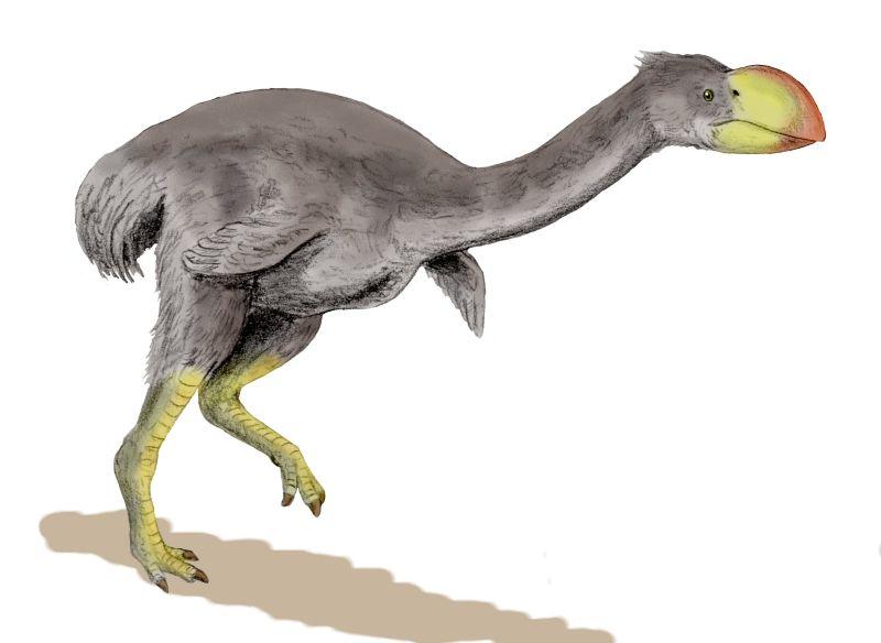 Descubren que el ave más grande que habitó la Tierra era un buen padre