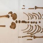 Descubren qué enfermedad afectaba a muchos niños romanos