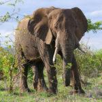 Descubren qué es lo que más asusta a los elefantes