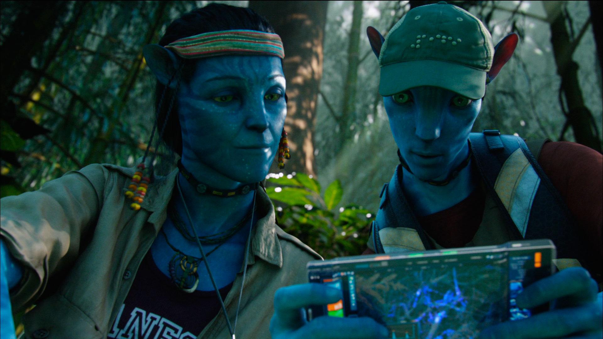 Descubren que los árboles se conectan como en Avatar