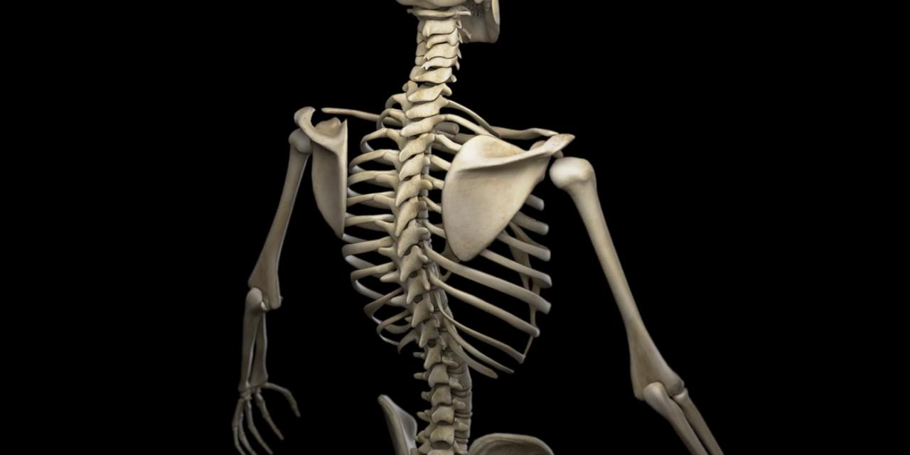 Descubren que los huesos influyen en nuestro apetito