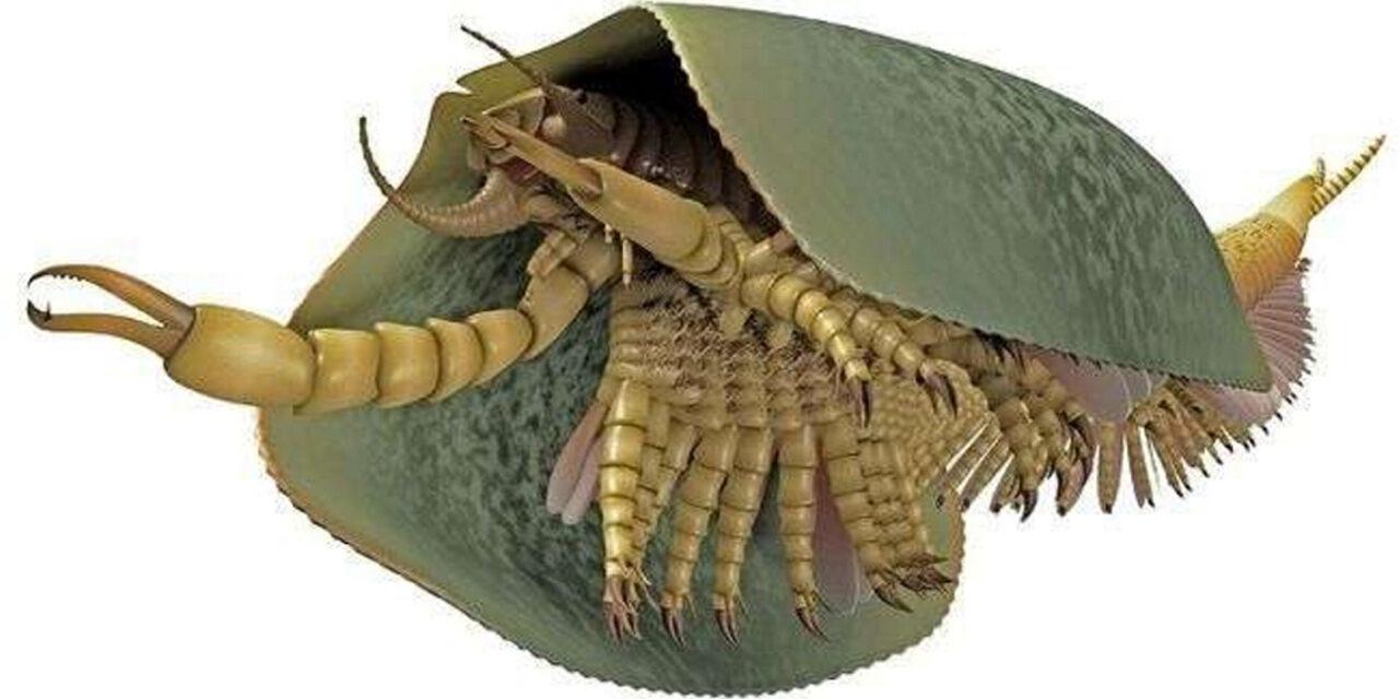 Descubren un monstruo marino de hace 500 millones de años