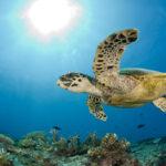 8 bellísimas imágenes para celebrar el Día Mundial de los Océanos