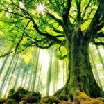 Dicen que los árboles podrían tener algo parecido al pulso, aunque es imperceptible para nosotros