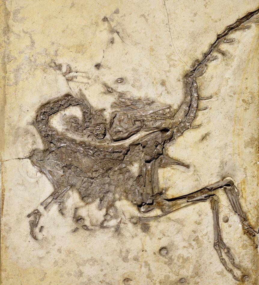 Dinosaurios hechos un ovillo