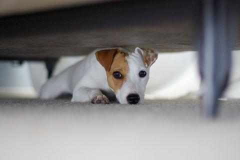 ¿Por qué los perros se esconden debajo de la cama?