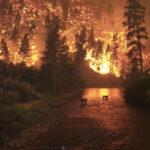 Dos adolescentes crean un sistema de alerta temprana de incendios