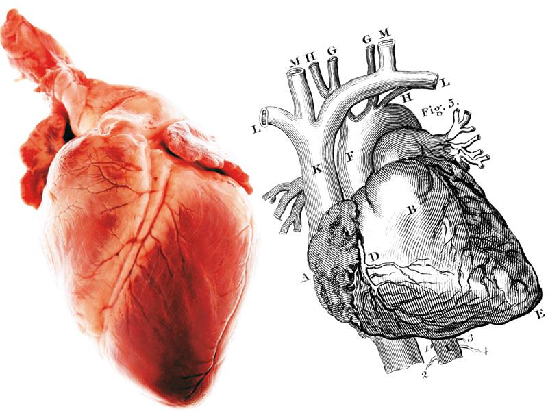 ¿El amor reside en el corazón?