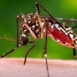 El cambio climático provoca un aumento de las enfermedades infecciosas