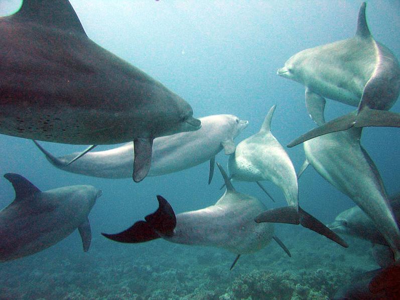 El campeón del mundo de buceo… de los delfines