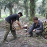 El coste ambiental del aceite de palma