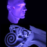 El cuerpo humano: Recorrido del sonido