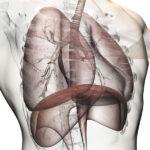 El cuerpo humano: Trasplante de pulmones
