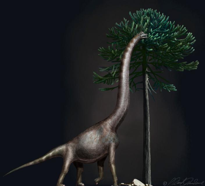 ¿El dinosaurio más grande del mundo?