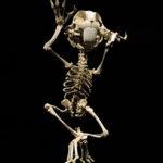 El esqueleto del Bugs Bunny