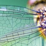 El insecto más antiguo del mundo inspira a la ciencia