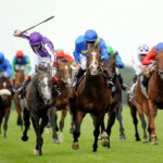 El intenso esfuerzo puede provocar la muerte de los caballos de carreras