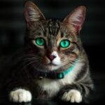 El moquillo felino. La terrible enfermedad que puede matar a tu gato