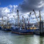 El rendimiento de la pesca puede descender hasta un 60%