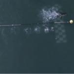 El tiburón blanco derrota a Michael Phelps
