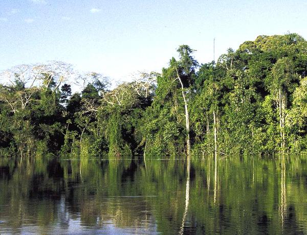 El Amazonas nunca fue el pulmón del planeta