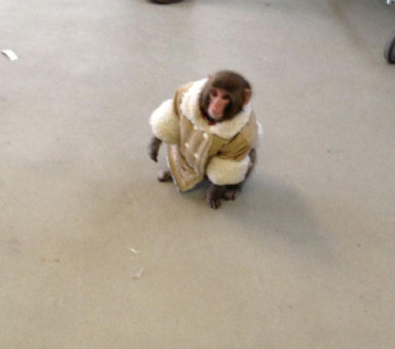Mono de Ikea, final feliz