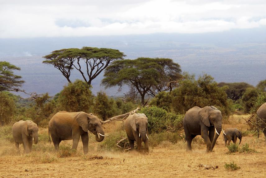 Elefantes en equipo