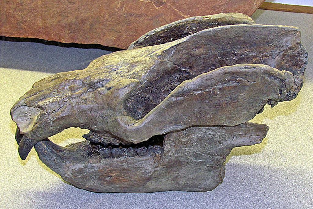 Encuentran 38 fósiles de crías de un mamífero con 184 millones de años