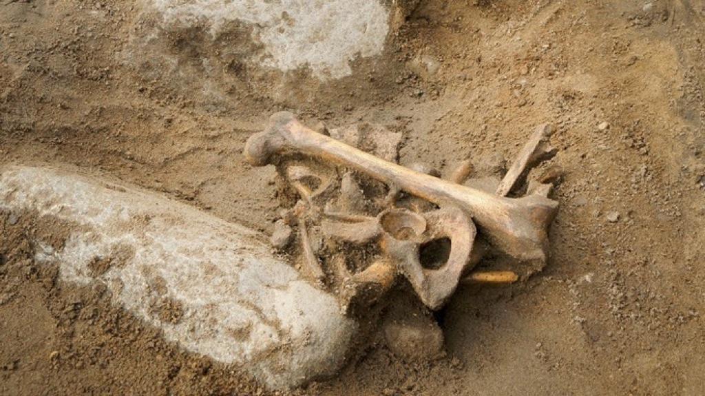 Encuentran el esqueleto de un pirata en una escuela