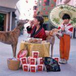 ¿Por qué no deberías darle comida casera a tu mascota?