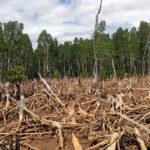 ¿Es posible lograr una deforestación cero?