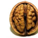 Esta startup quiere embalsamar tu cerebro para preservar tus recuerdos