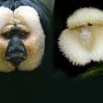 Estas orquídeas tienen cara de mono