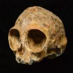 Este es el ancestro común de humanos y primates y tiene 13 millones de años