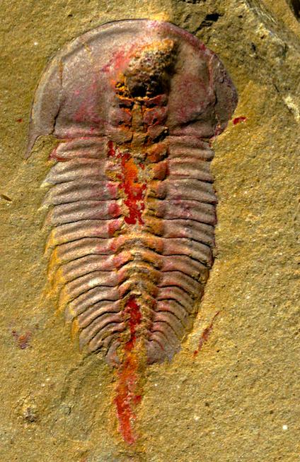 Este es uno de los sistemas digestivos más antiguos
