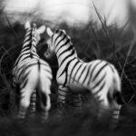 Estos animales no son reales… aunque lo parezcan