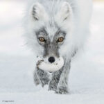 Estos preciosos retratos son los finalistas del certamen 'Fotógrafo de fauna salvaje del año'