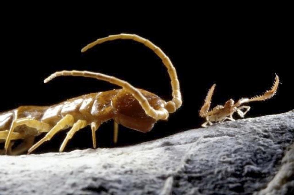 Estos seres llevan 50 millones de años sin ver la luz