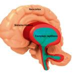 Evolución de las partes del cerebro