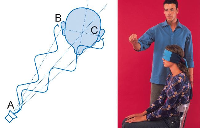 Experimentos con tu cuerpo: el oído